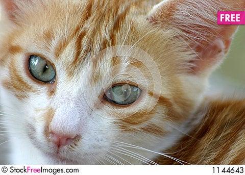 Free Little Kitten Stock Photos - 1144643