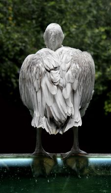 Free Bored Bird Stock Photos - 1140753