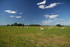 Free Estonian Landscape Stock Photo - 1142000