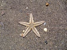 Free Starfish On The Beach Royalty Free Stock Images - 1142109