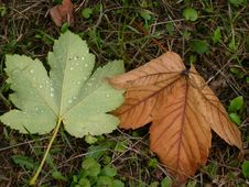 Free Sign Of Autumn Stock Images - 1144224