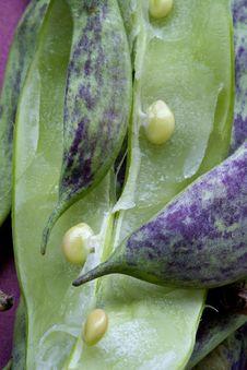 Free Big Green Bean-pods Royalty Free Stock Photo - 1144945