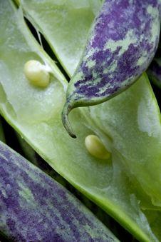 Free Big Green Bean-pods Royalty Free Stock Image - 1144956