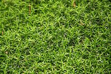 Free Moss On Trunk Royalty Free Stock Photography - 1146007