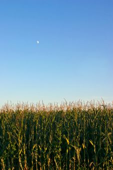 Free Corn And The Moon Stock Photo - 1146040