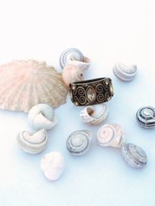 Free Shells And Ring 2 Stock Images - 1146224