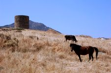 Free Santorin Stock Image - 1146561