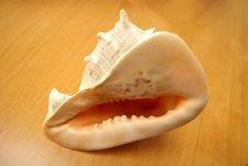 Free Sea Shell Royalty Free Stock Photos - 1148528