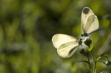 Free Butterflys Stock Photography - 1149882