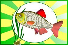 Free Colored Illustration Of Fish Royalty Free Stock Photos - 11400018