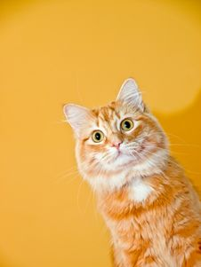 Free Cat Puppet Stock Photos - 11402333