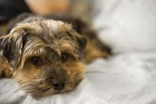 Free Selective Focus Photo Of Long-coated Brown Puppy Stock Photo - 114021560