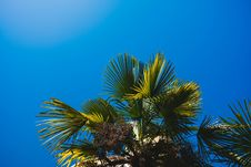 Free Low Angle Photography Of Palm Leaves Stock Image - 114021621