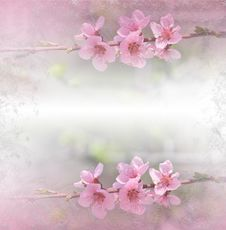 Free Floral Spring Border Background With Pink Blos. Invitation.Paper Cards Decorative Pattern.Border Or Frame And Copy Space. Texture. Stock Photography - 114093022