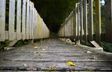 Free Yellow, Walkway, Path, Tree Stock Image - 114130291