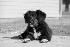 Free Dog, Black, Dog Like Mammal, Black And White Royalty Free Stock Photos - 114130438
