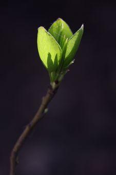Free Plant, Bud, Leaf, Branch Royalty Free Stock Photo - 114130645
