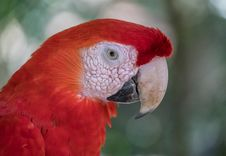 Free Beak, Red, Bird, Macaw Stock Image - 114130651