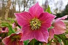 Free Flower, Plant, Flora, Flowering Plant Royalty Free Stock Photo - 114130675