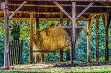 Free Cattle-feed-2820846 Stock Image - 114194601