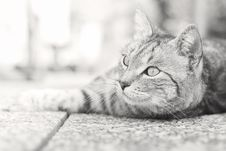 Free Cat, Black And White, Whiskers, Mammal Royalty Free Stock Photos - 114227138