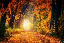 Free Nature, Autumn, Woodland, Leaf Stock Photography - 114227282