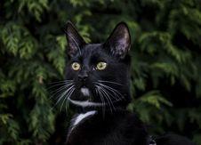 Free Cat, Black Cat, Whiskers, Mammal Stock Image - 114227291