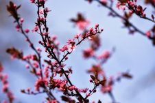 Free Blossom, Branch, Pink, Spring Stock Images - 114227414