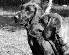 Free Black, Dog, Black And White, Dog Like Mammal Stock Image - 114227501