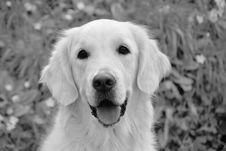 Free Dog, White, Dog Like Mammal, Black Stock Images - 114227504