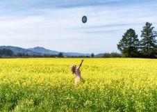 Free Field, Grassland, Ecosystem, Canola Stock Photography - 114227572