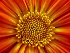 Free Flower, Yellow, Orange, Close Up Stock Photo - 114227670