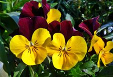 Free Flower, Yellow, Plant, Flowering Plant Royalty Free Stock Photography - 114227677