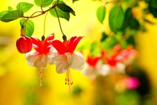Free Flower, Flora, Red, Yellow Stock Photo - 114227860