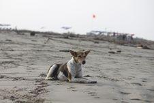 Free Dog, Street Dog, Beach, Sand Stock Photo - 114227950