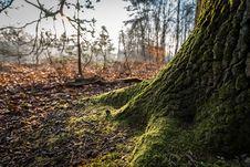 Free Nature, Woodland, Ecosystem, Tree Royalty Free Stock Photo - 114227955
