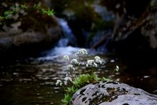 Free Water, Nature, Stream, Watercourse Stock Images - 114228124