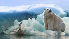 Free Polar Bear, Bear, Arctic Ocean, Arctic Royalty Free Stock Photos - 114228158
