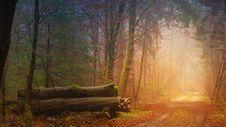 Free Nature, Forest, Woodland, Ecosystem Stock Photography - 114296402
