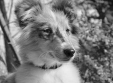 Free Dog, Black And White, Dog Breed, Monochrome Photography Stock Photography - 114296612