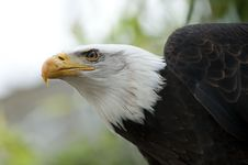 Free Beak, Bird Of Prey, Bird, Eagle Royalty Free Stock Photos - 114296658
