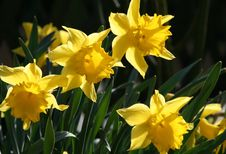 Free Flower, Plant, Yellow, Flowering Plant Stock Photography - 114296722