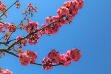 Free Blossom, Branch, Sky, Pink Stock Photo - 114296820