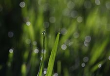 Free Water, Dew, Moisture, Drop Stock Photography - 114296912
