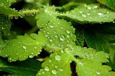 Free Water, Leaf, Drop, Dew Stock Image - 114296941