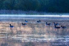 Free Water, Bird, Waterway, Water Bird Royalty Free Stock Photo - 114297735