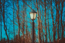 Free Black Lamp Post Near Leafless Trees Royalty Free Stock Photography - 114321167