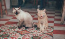 Free Close-Up Photography Of Two Cats Royalty Free Stock Images - 114378459