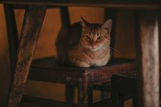 Free Photography Of Orange Tabby Cat On Chair Stock Photo - 114378470