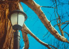 Free Black Post Lamp Near Tree Stock Photo - 114378500
